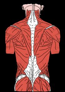 Beckenheben stärkt Rücken und Po